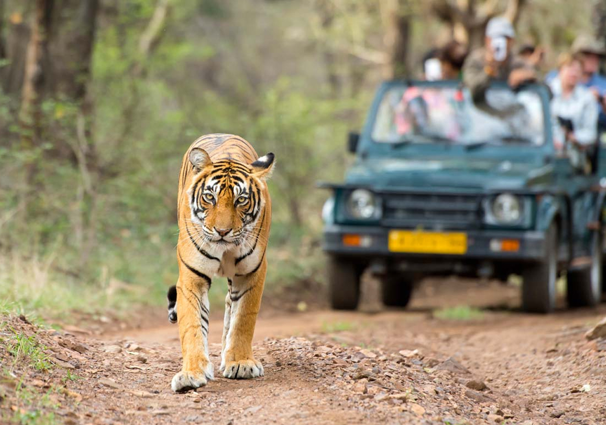 national parks in india List of national parks of india topic national parks in india are iucn category ii protected areas  india 's first national park was established in 1936 as hailey national park, now known as jim corbett national park , uttarakhand.